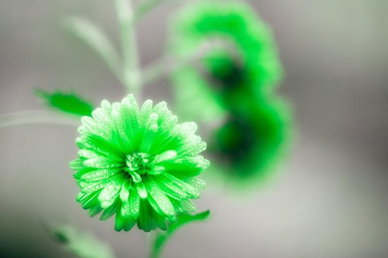 Nature_20160908_25-1 Green.jpg