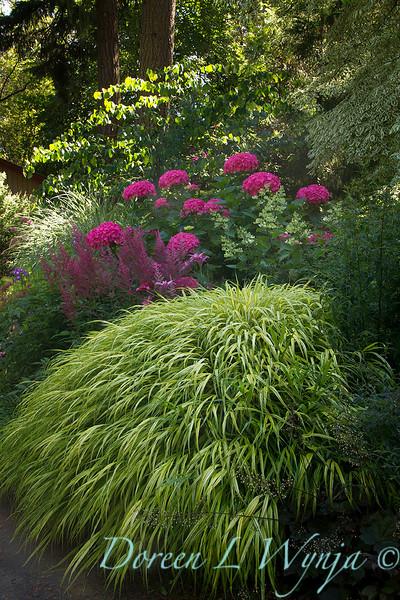 Hakonechloa macra 'Aureola' - Hydrangea macrophylla 'Merritt's Supreme' - Astilbe chinensis 'Purple Rain'_3906.jpg