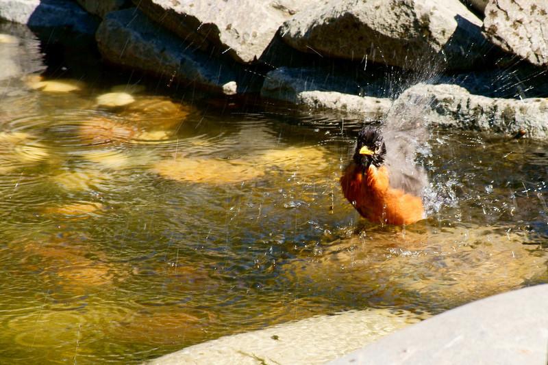 birdy bath RAW 45C.JPG