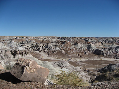 Petrified Forest 11.19.07
