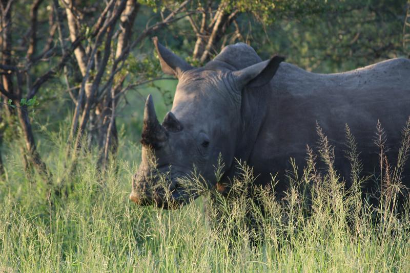 S Africa_S Africa_IMG_2063.JPG