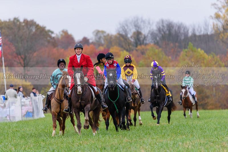 PA Large Pony Field Master