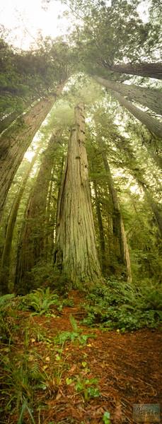 20141015_RedwoodsiPhone_0020.jpg