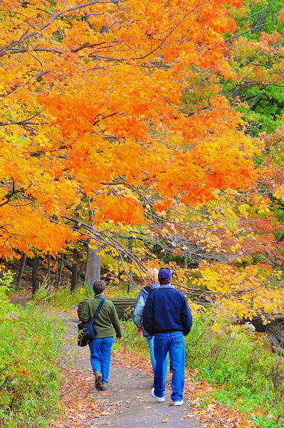 Photographers in search of Fall Colors near Cornell University, Ithaca, New York.