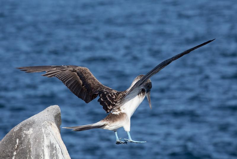Galapagos_MG_5008.jpg