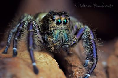 True spiders, other arachnids