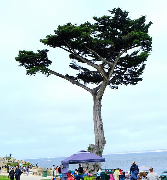 California Day 3 Monterey 05-29-2017 17.JPG