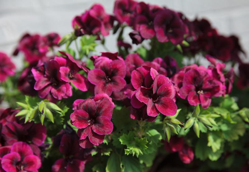 flower20.jpg