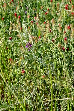 2021 Texas Wild Flowers