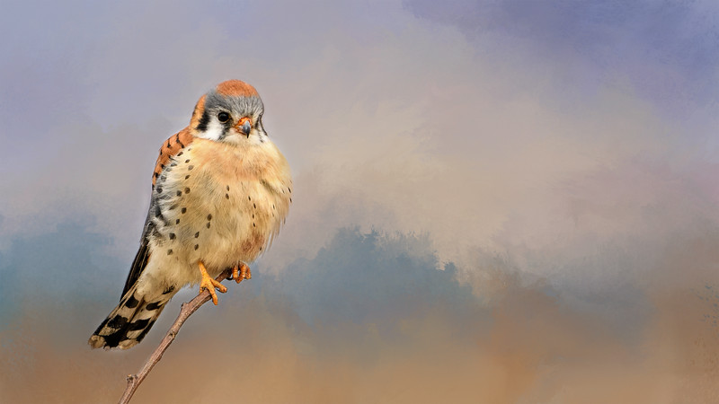 Kestrel Wallpaper-Multiply-1858.jpg