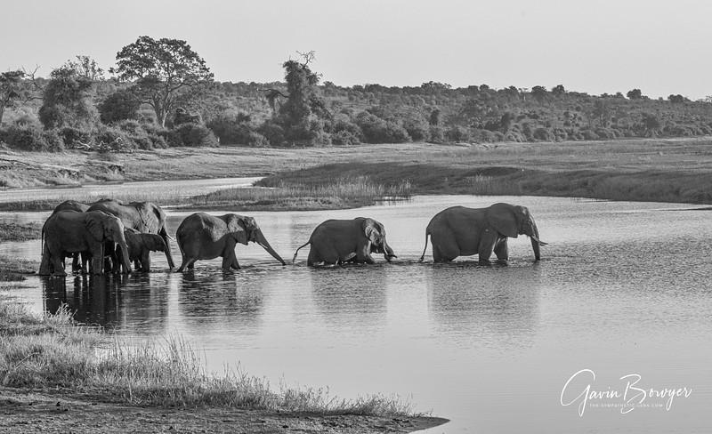 Elephants Botswana-12.jpg