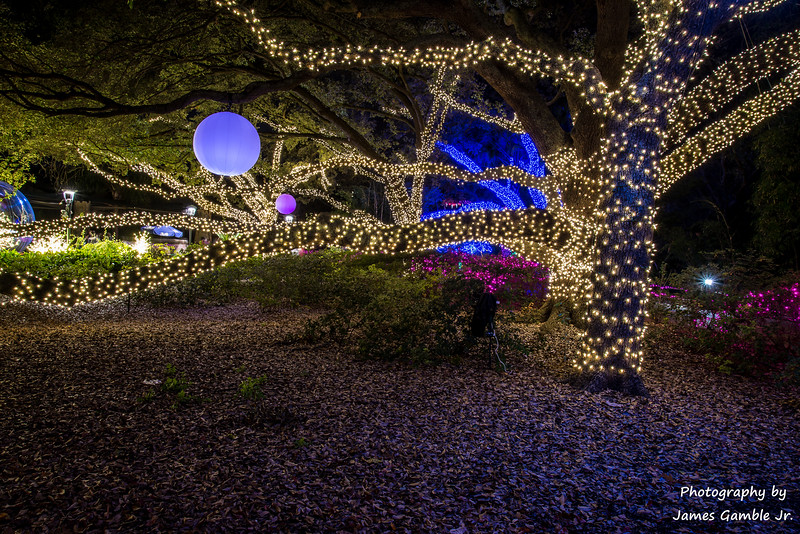 Houston-Zoo-Lights-3136.jpg