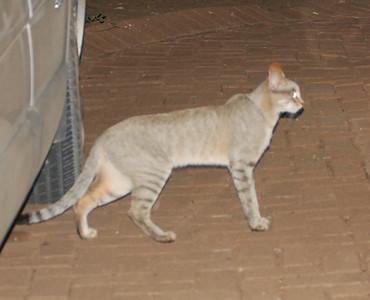 Kruger African Wildcats