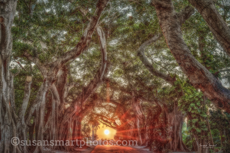 Banyan Street Sunset
