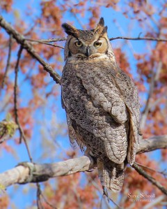 New Jersey Birds & Wildlife