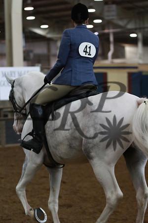 Morgan Horse OKC 4-11-2013