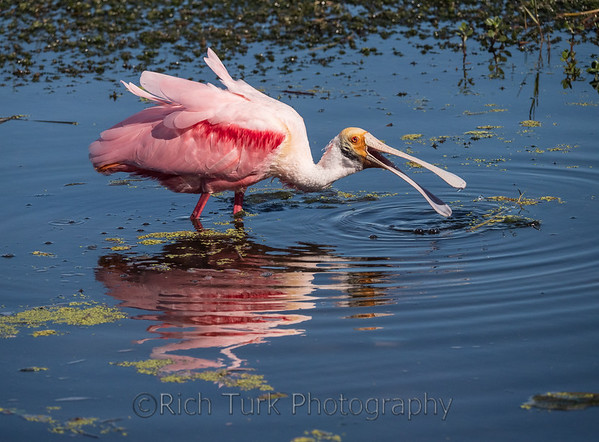 Florida Birds & Wildlife From A to Y (2019)