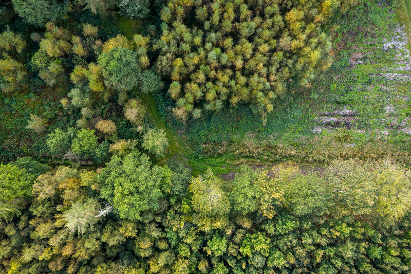 Autum woods.jpg