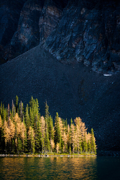 """The larches of Taylor Lake"" VI, Banff National Park, Alberta, Canada."