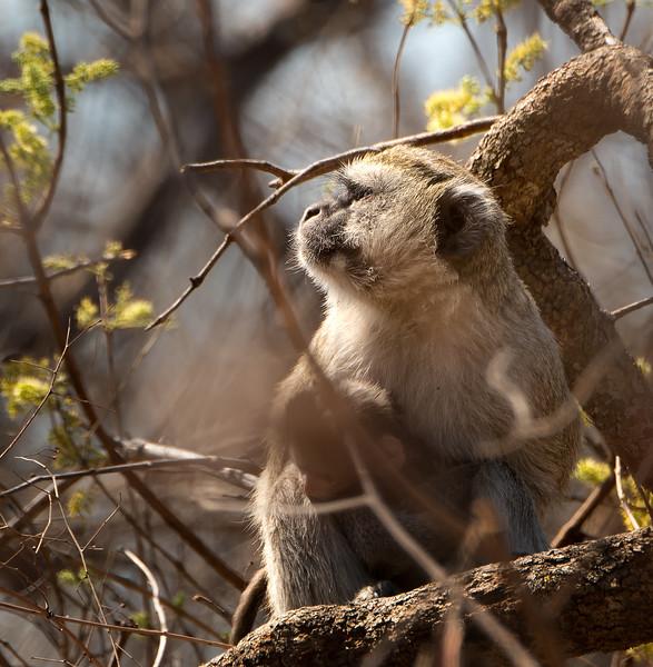 African Safari - Kafue, Zambia - Aug. 2014