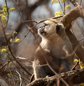 African Safari - Kafue, Zambia - Aug. 2014