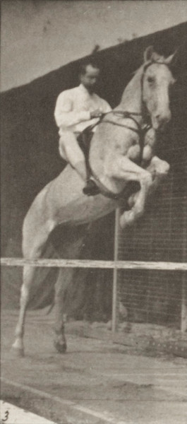 Horse Pandora jumping a hurdle, saddled with a rider, clearing and landing