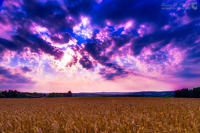 Sunrise over Wheat Field