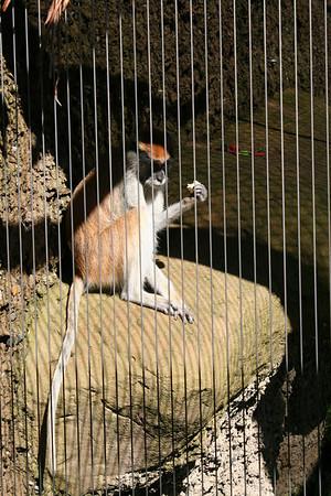 SB Zoo - Spring 2011