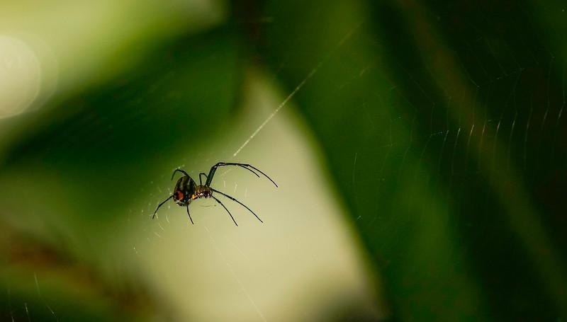 Spiders-Arachnids-126.jpg