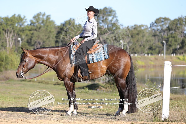 Photos from QLD State Show afternoon by the lake