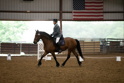 Horse 46