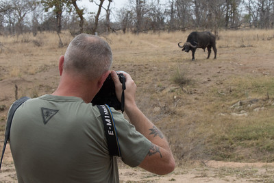 Photographing buffalo