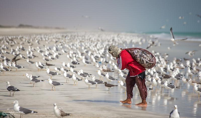 Sardine Season (38)- Dhofar.jpg