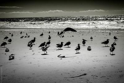 Birds & Beach 2017