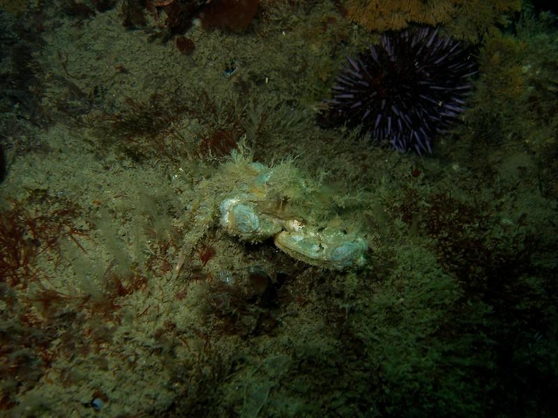 CA Crustaceans  73.jpg