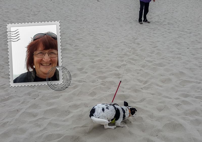 Beach walk with Mattie (5 of 20).jpg