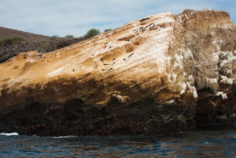 Golden Rock : Journey into Genovesa Island in the Galapagos Archipelago