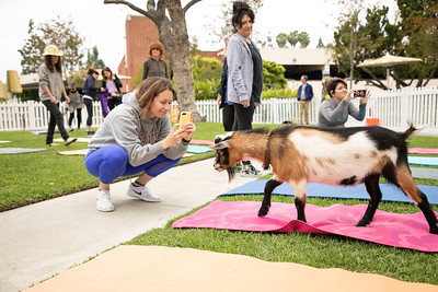 Event - Scrubs - Goat Yoga
