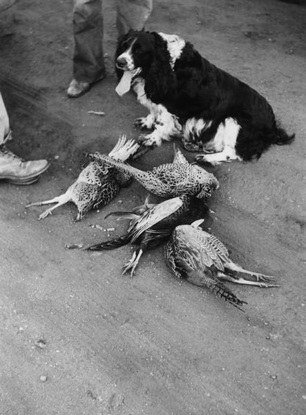 ARH005.  Lulabelle with pheasants – 1943‡.jpg