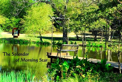 MORNING STAR RANCH - The Property