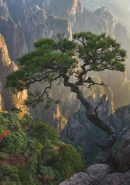 Autumn Tree in Huangshan