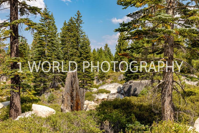 San Fran_Lake Tahoe Trip 2017-1301-68.jpg