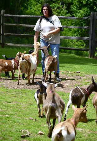 goats-SO-052719_0936
