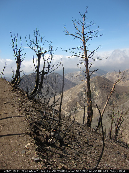 20100404108-Angeles National Forest, Strawberry Peak trail.JPG