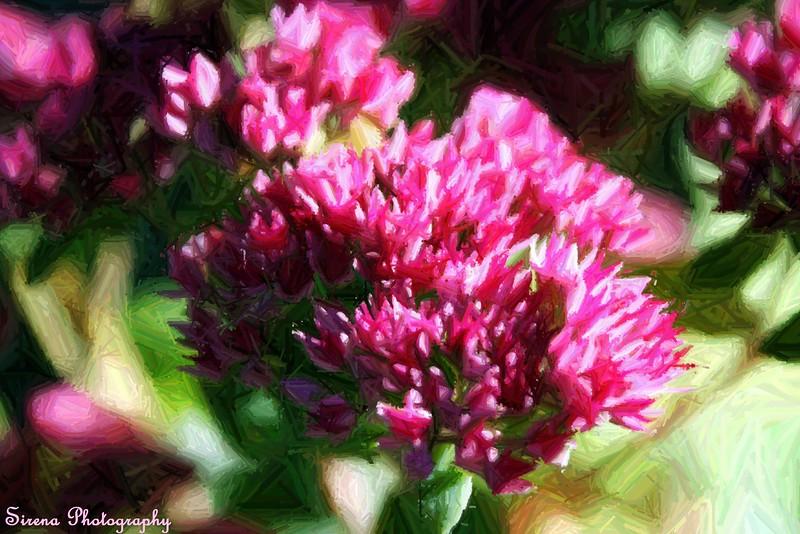 Fall Flower.4.JPG