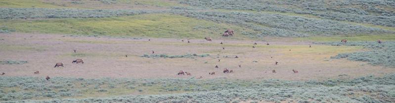 Yellowstone-15.jpg