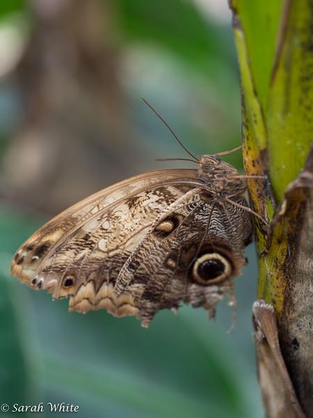 140503_ButterflyHouse_335.jpg