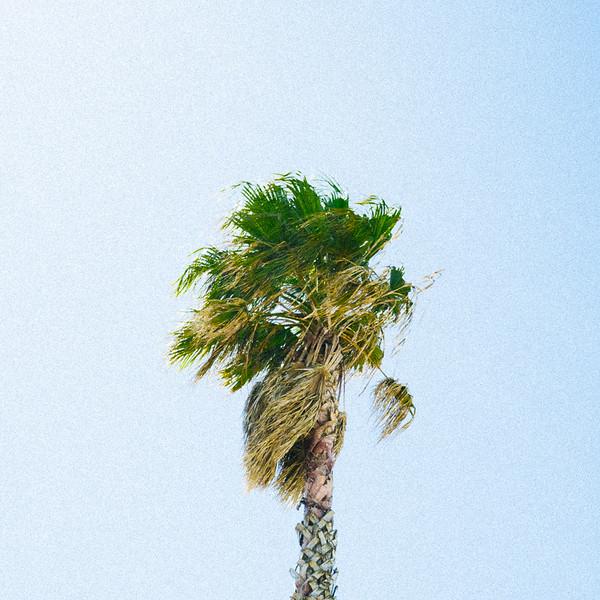 Palm Sky IX