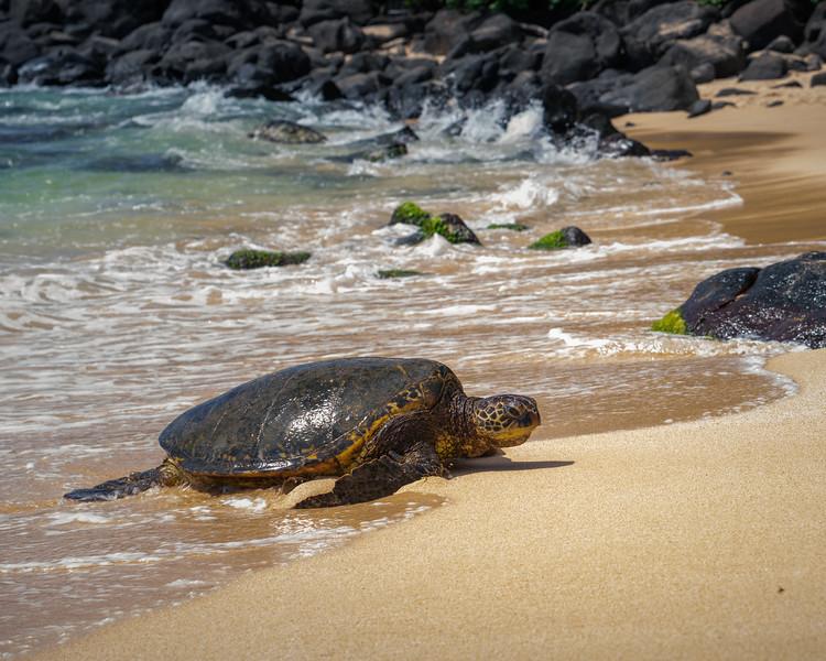 Punahele the Sun Lover || Laniakea