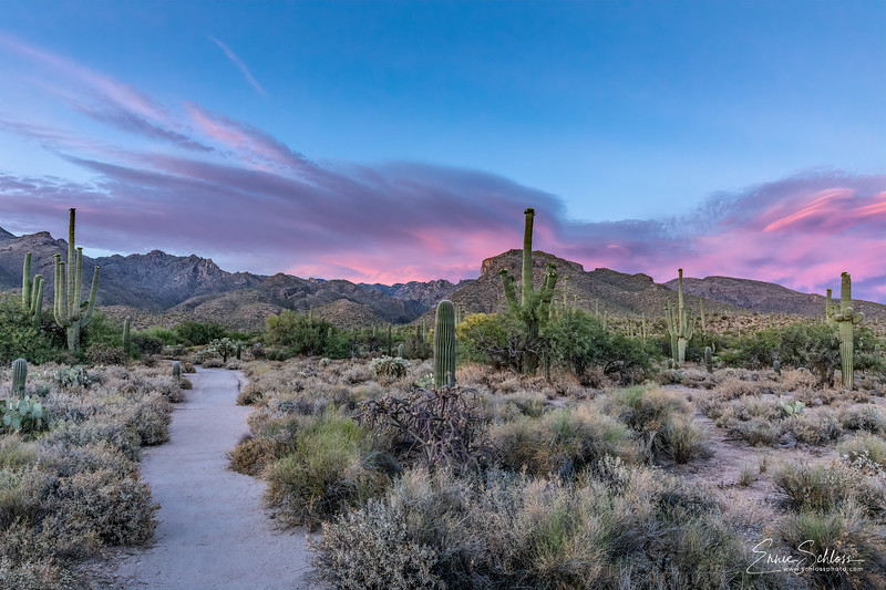 Sabino Sunset 5-28-2019f-.jpg
